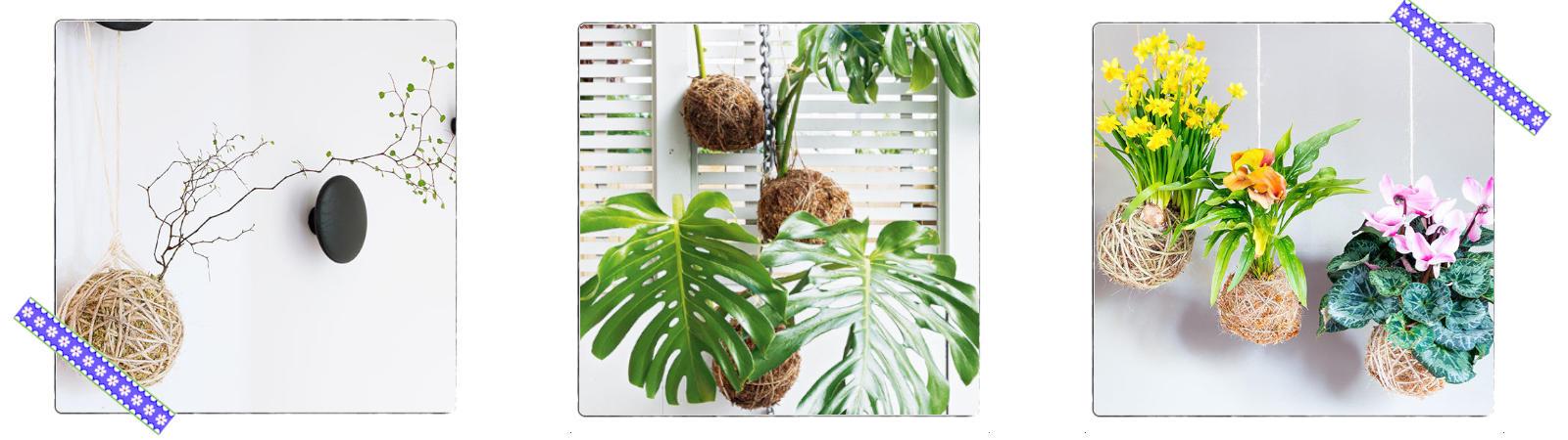 Nachhaltigkeit-im-Alltag-Kokemda-Pflanzen-1600x450